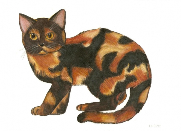 tortishell cat