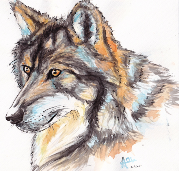 . wolf (watercolors 8)