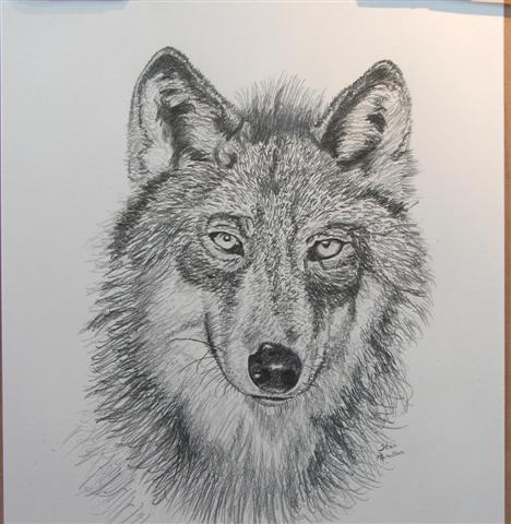 Penciled wolf