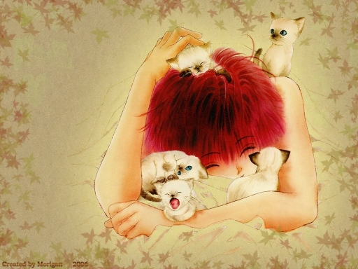 Cats And Boy