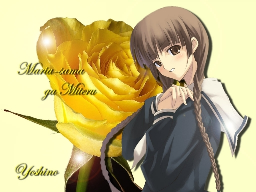 Yellow Rose Yoshino