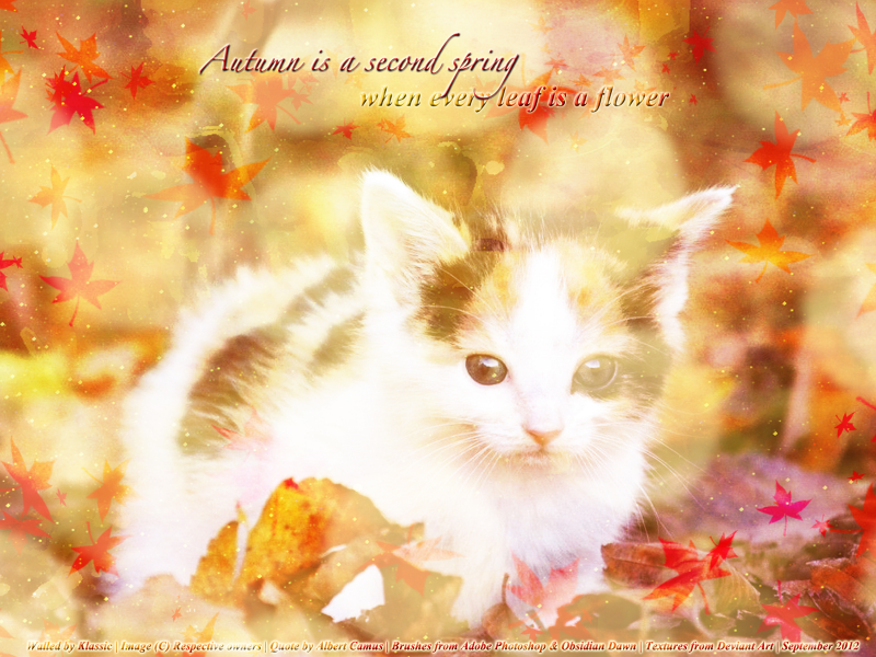 Autumn Kitty<3