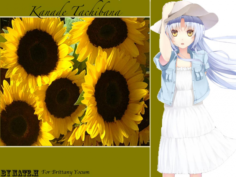 Kanade Tachibana Sunflowers
